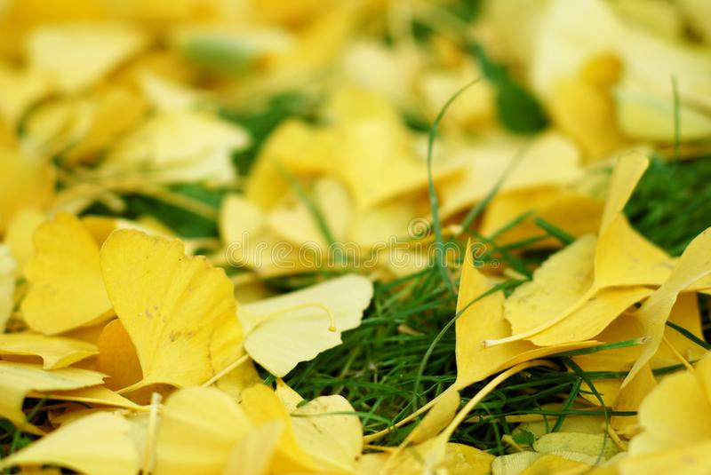 Autumn's leaves stock photography