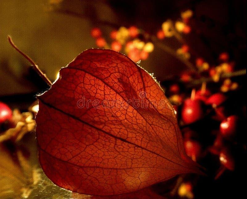 Autumn& x27; s Warmte royalty-vrije stock afbeeldingen