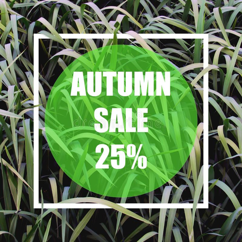 Autumn sale 25%. Creative layout made with green leaves background, square frame. This is a blank for advertising card. Nature concept. Summer poster stock illustration