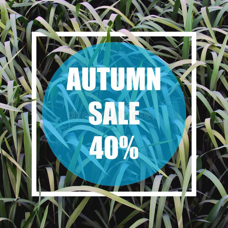 Autumn sale 40%. Creative layout made with green leaves background, square frame. vector illustration