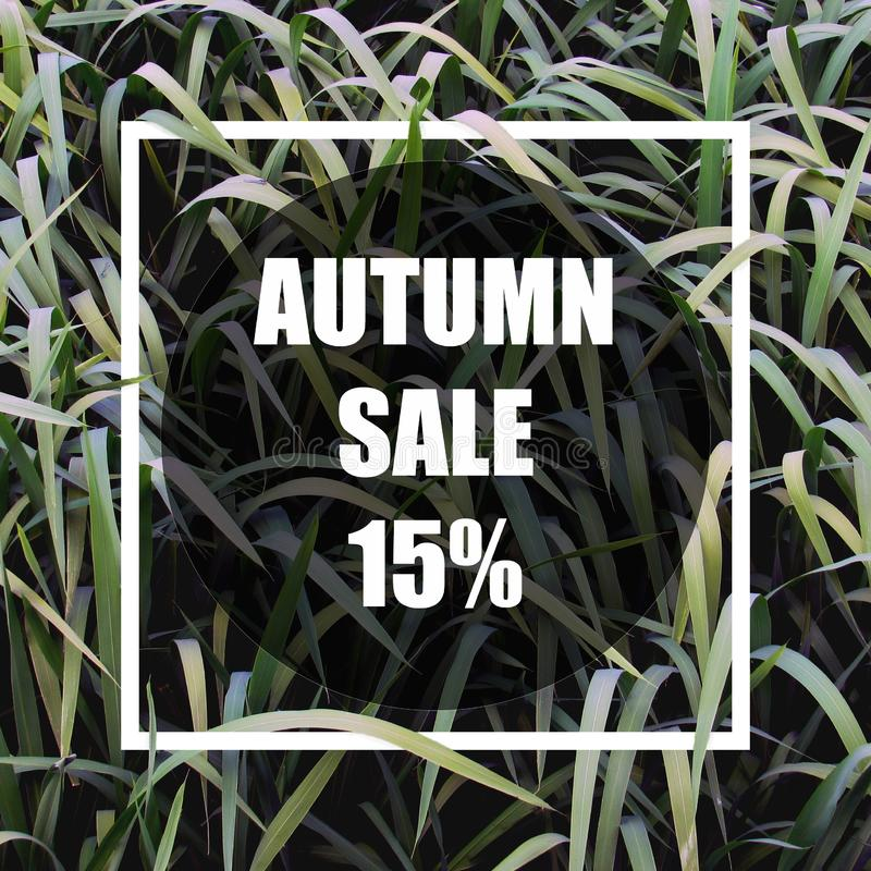 Autumn sale 15%. Creative layout made with green leaves background, square frame. stock illustration