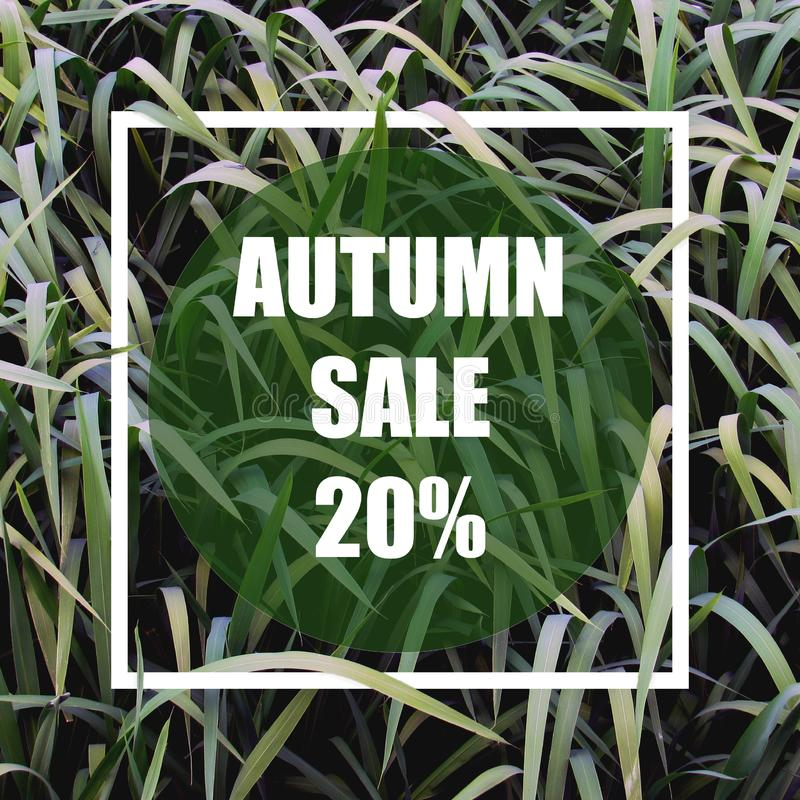 Autumn sale 20%. Creative layout made with green leaves background, square frame. This is a blank for advertising card. Nature concept. Summer poster royalty free illustration