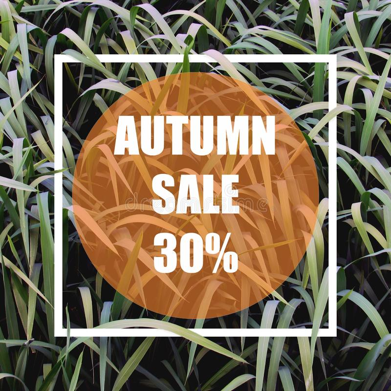 Autumn sale 30%. Creative layout made with green leaves background, square frame. vector illustration