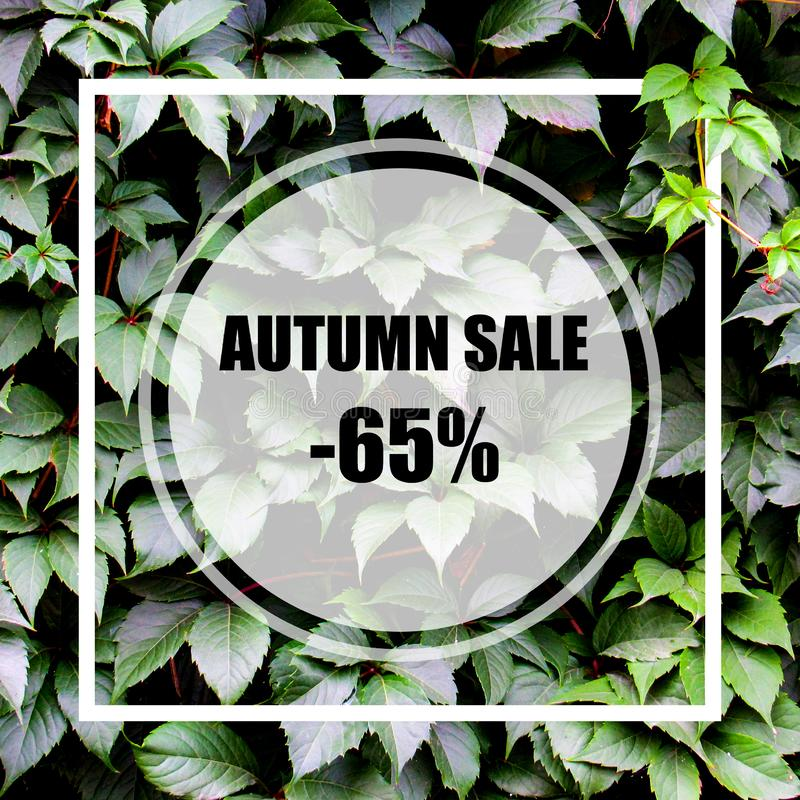 Autumn Sale -65%. Creative layout made with green leaves background, square frame. This is a blank for advertising card. royalty free stock image