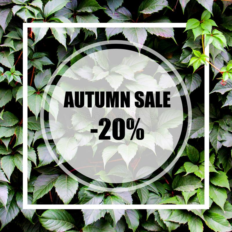 Autumn Sale -20%. Creative layout made with green leaves background, square frame. This is a blank for advertising card. Nature concept. Autumn poster stock photography