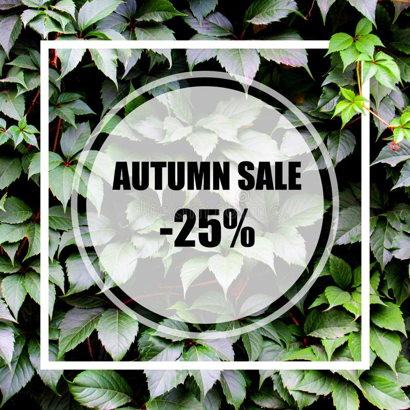 Autumn Sale -25%. Creative layout made with green leaves background, square frame. This is a blank for advertising card. Nature concept. Autumn poster stock image