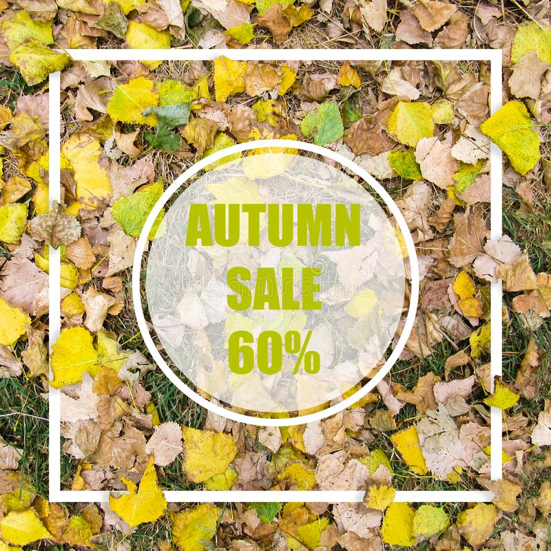 Autumn Sale 60%. Creative layout made with yellow leaves background, square frame. This is a blank for advertising card. Nature concept. Autumn poster stock photography