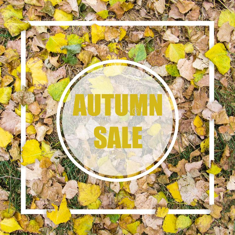 Autumn Sale. Creative layout made with yellow leaves background, square frame. This is a blank for advertising card. Nature concept. Autumn poster royalty free stock photo