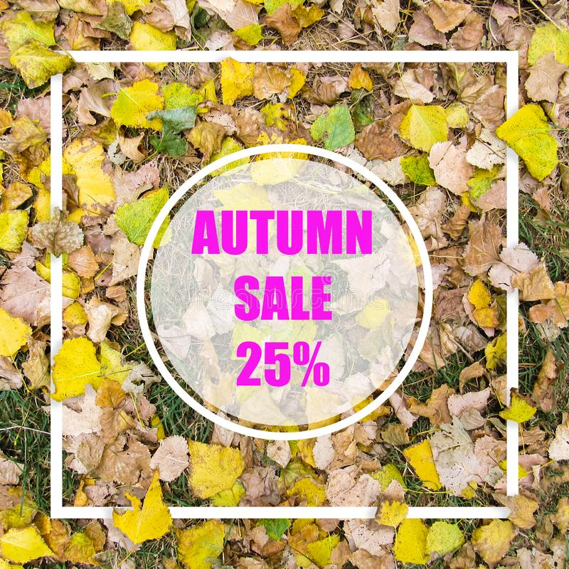 Autumn Sale 25%. Creative layout made with yellow leaves background, square frame. This is a blank for advertising card. Nature concept. Autumn poster royalty free stock photography