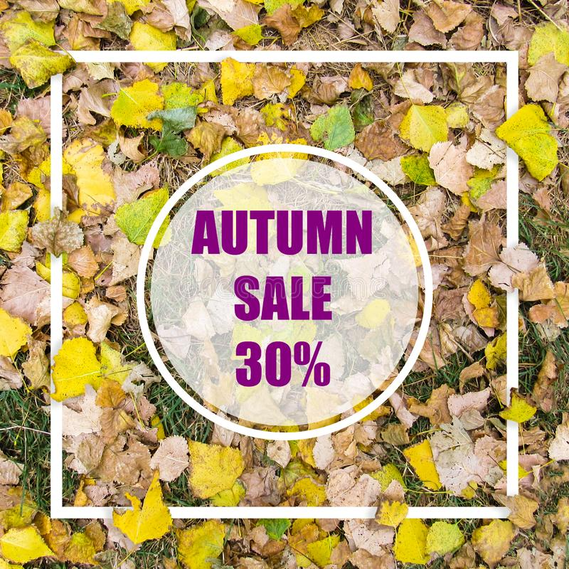 Autumn Sale 30%. Creative layout made with yellow leaves background, square frame. This is a blank for advertising card. Nature concept. Autumn poster stock illustration