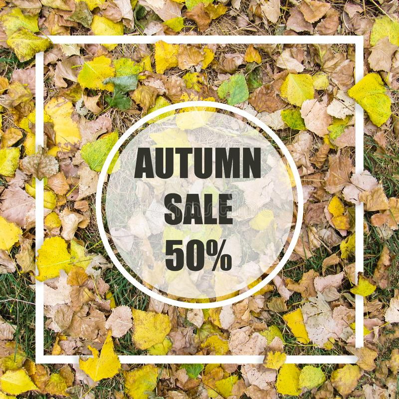 Autumn Sale 50%. Creative layout made with yellow leaves background, square frame. This is a blank for advertising card. Nature concept. Autumn poster royalty free stock photos