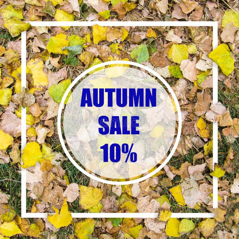 Autumn Sale 10%. Creative layout made with yellow leaves background, square frame. This is a blank for advertising card. Nature concept. Autumn poster royalty free stock image