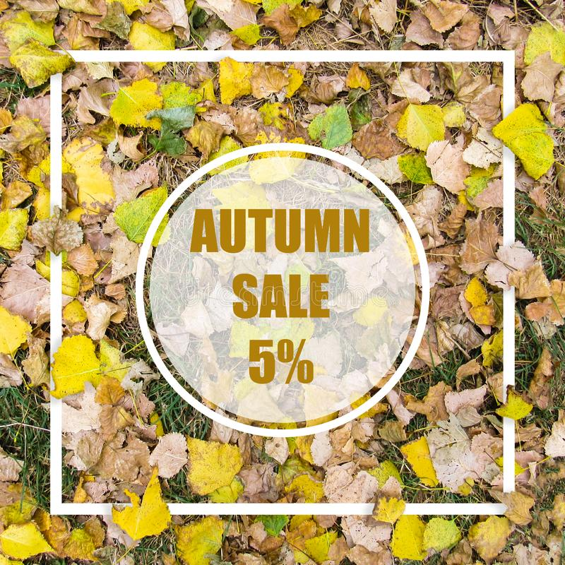 Autumn Sale 5%. Creative layout made with yellow leaves background, square frame. This is a blank for advertising card. Nature concept. Autumn poster stock photos