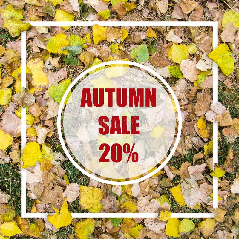 Autumn Sale 20%. Creative layout made with yellow leaves background, square frame. This is a blank for advertising card. stock images