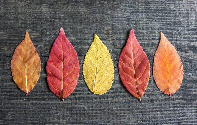 Autumn sale leaves Space for text SALE! royalty free stock photo