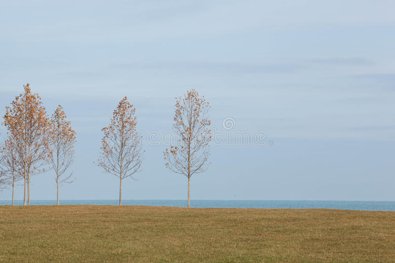 Autumn Saplings sur les rivages du lac Michigan Chicago photo stock