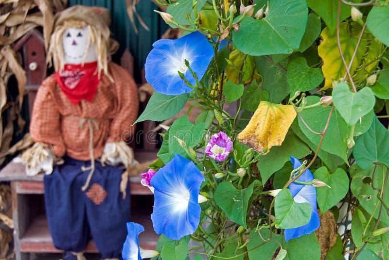 Autumn scarecrow with morning glory stock photo