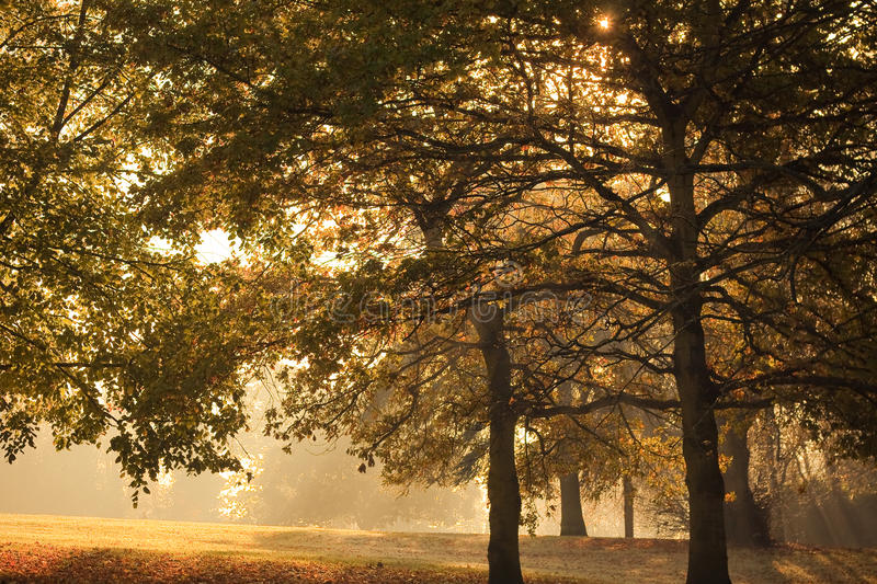 Download Autumn Scene stock photo. Image of path, brown, beauty - 16995256