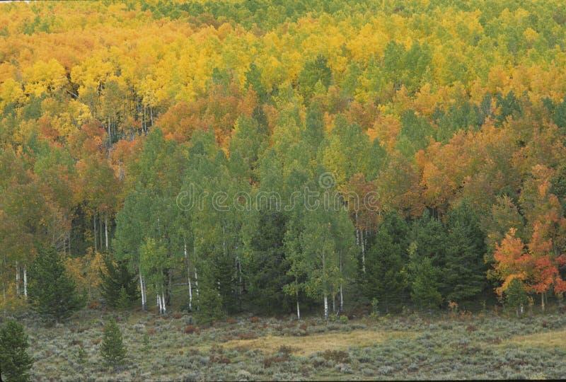 Autumn scene 272-3-1 stock photos