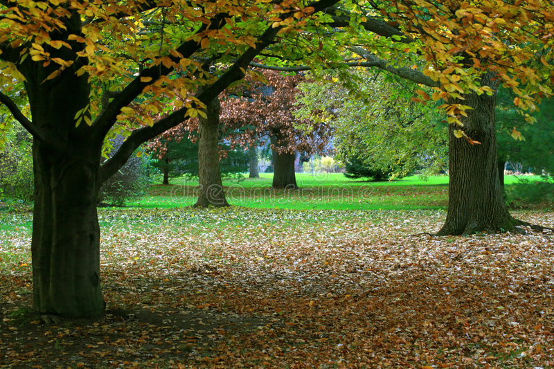 Autumn Scene. This beautiful Autumn scene as found in a city park stock photography