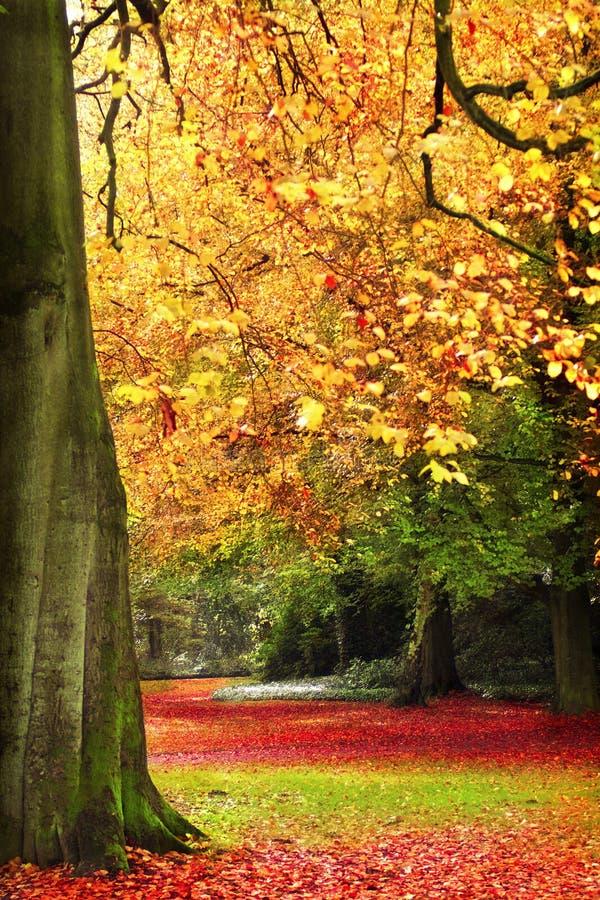 Download Autumn scene stock image. Image of rural, scene, tree - 5671737