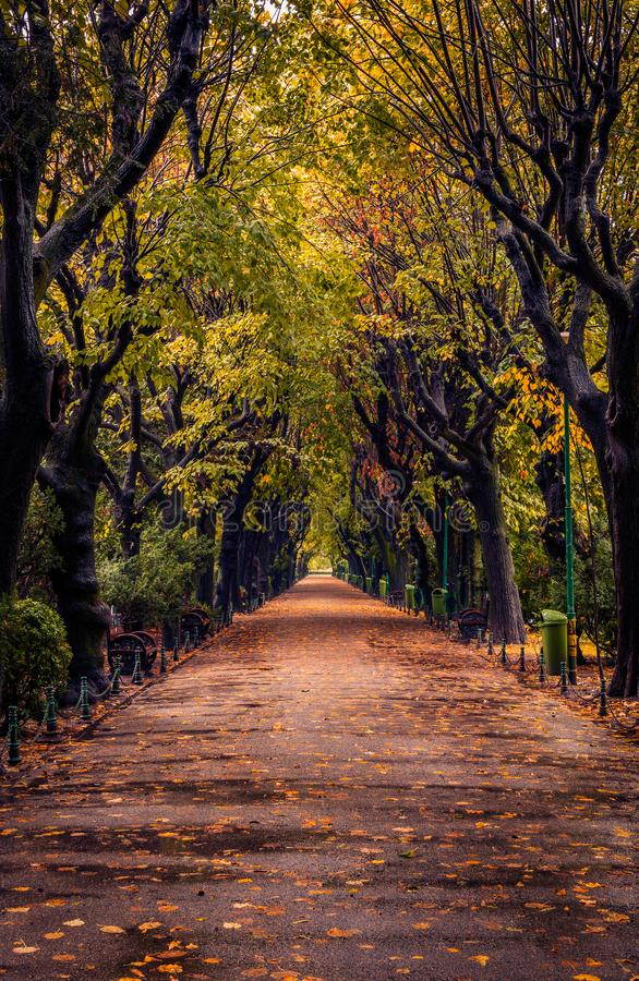 Autumn scene with alley in a park on a rainy day stock photo