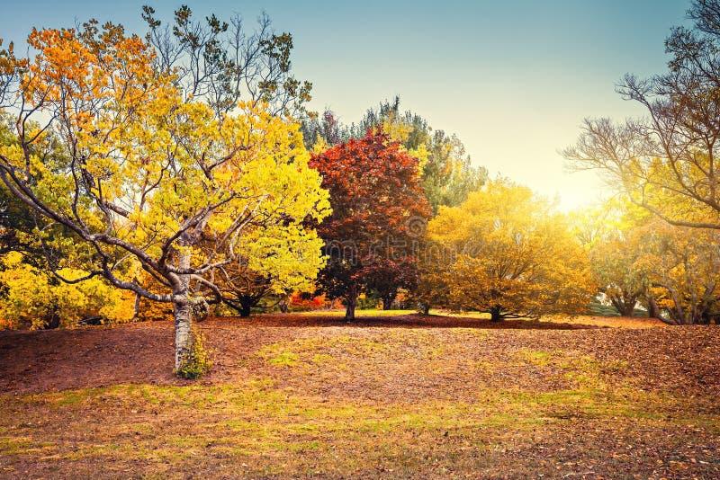 Autumn scene with colourful trees in Adelaide Hills. Beautiful and peaceful autumn scene with colourful trees in the park, Adelaide Hills region, South Australia stock image