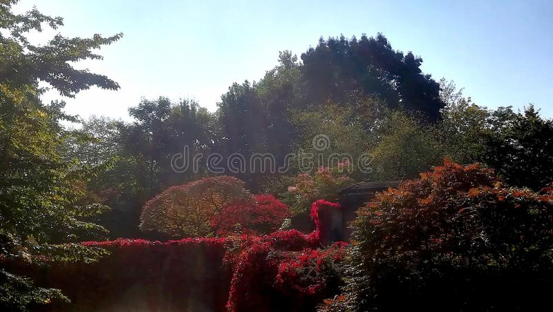 Autumn scene contrasting blue sky. Very colorful palet of typical seasonal nature during autumn royalty free stock images