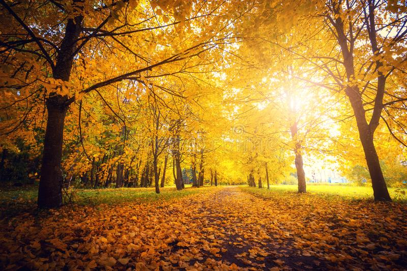 Autumn scene.Fall background. Colorful leaves in park everywhere. royalty free stock images