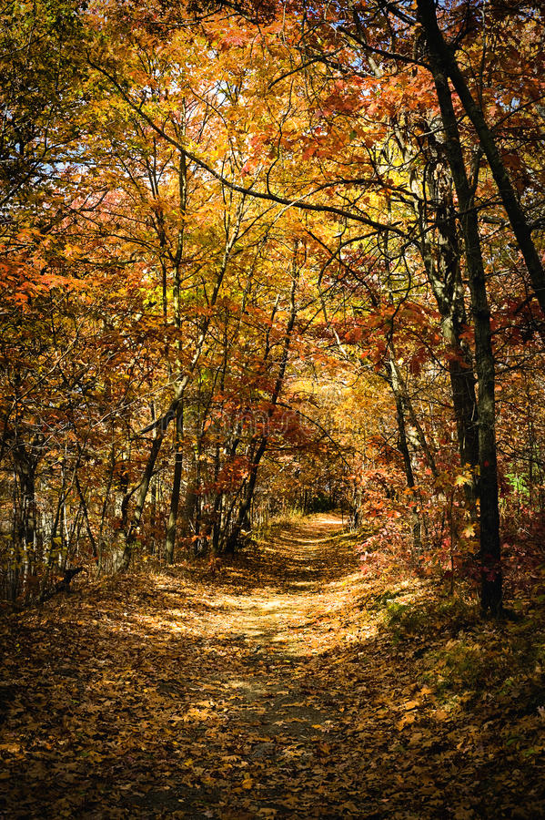 Autumn scene of a forest trail with colorful trees. A beautiful autumn scene of a trail surrounded by colorful trees royalty free stock images
