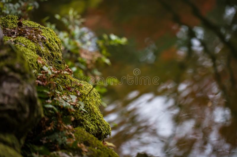 Autumn scene with pond and moss on rocks. Autumn scene with pond, reflections and moss on rocks stock photography