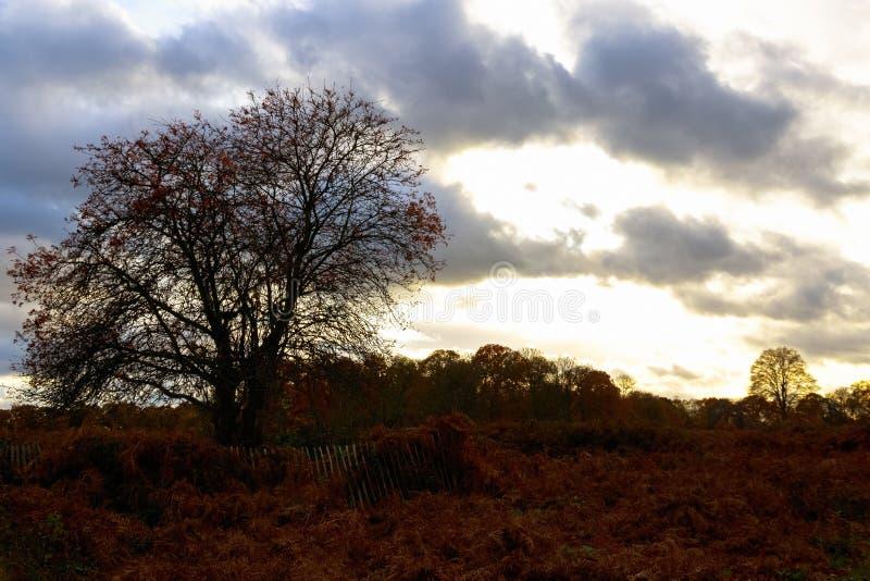 Autumn Scene in Richmond Park London fotografia stock libera da diritti