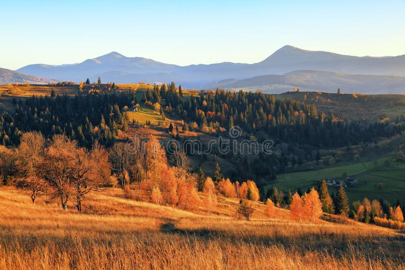 Autumn scene in the sunny day. At the high mountains with dense forest there are nice orange coloured trees on the big lawn. stock image