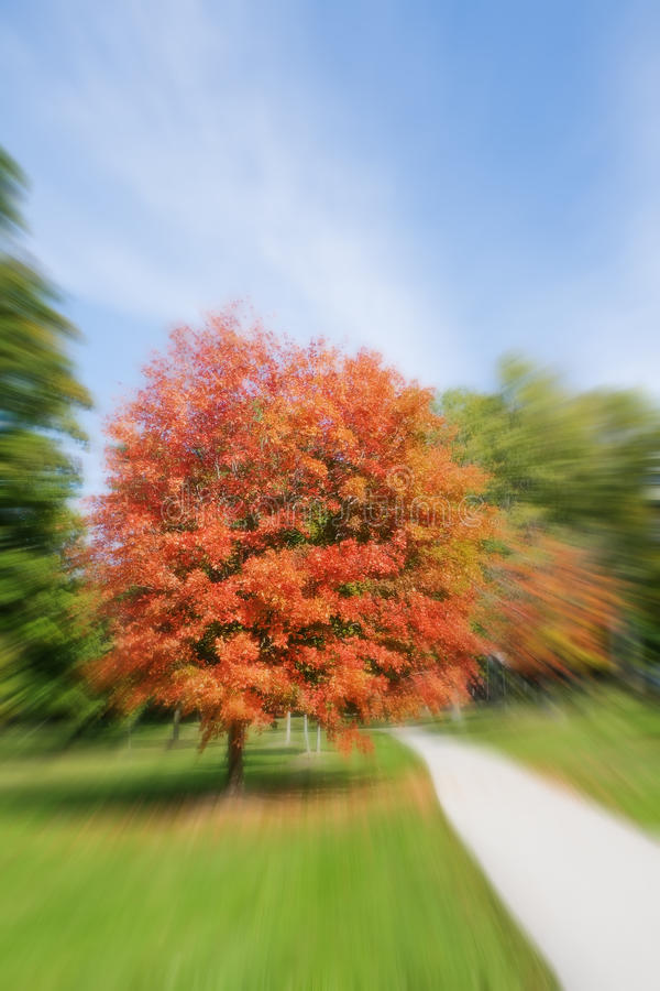 Download Autumn scenery stock image. Image of nature, fall, outside - 11044931