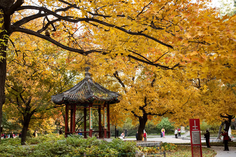Autumn scenery royalty free stock photography
