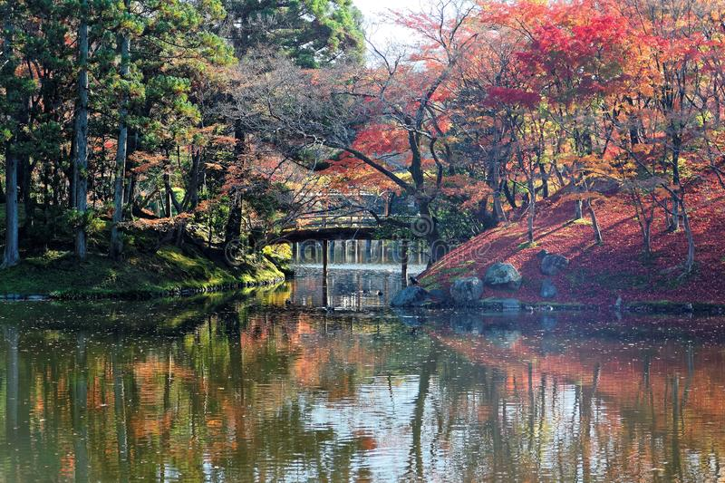 Autumn scenery fiery maple trees reflected on the peaceful lake water and a wooden bridge. Over the pond in a beautiful Japanese garden of Sento Imperial Palace royalty free stock photo
