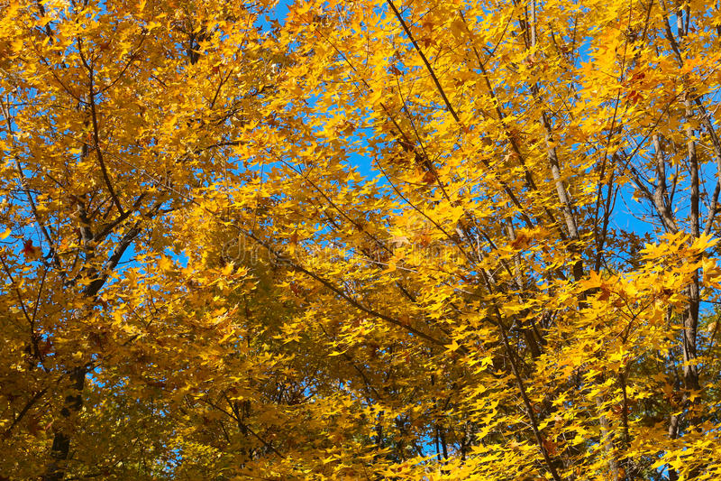 Autumnscenery royalty free stock photography