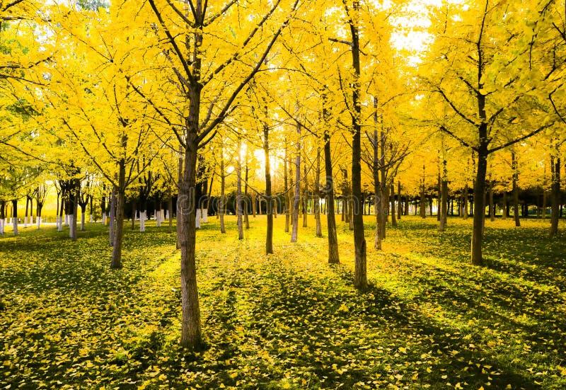Autumnscenery royalty free stock photo