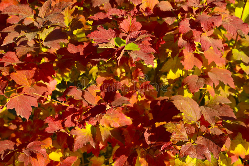 Autumnscenery stock image