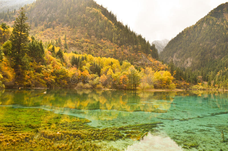 The autumn scenery royalty free stock photography