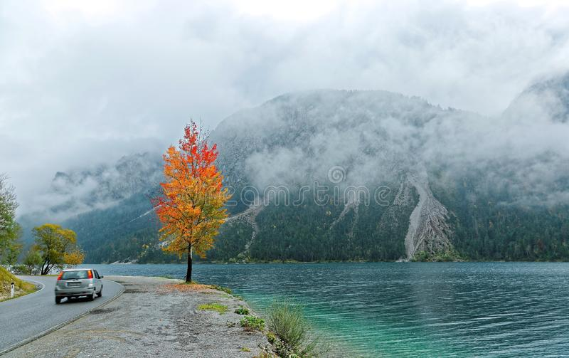 Autumn scenery of Lake Plansee with a car traveling on the highway, a fiery maple tree by lakeside & foggy alpine mountains. In background in Tirol, Austria stock photos