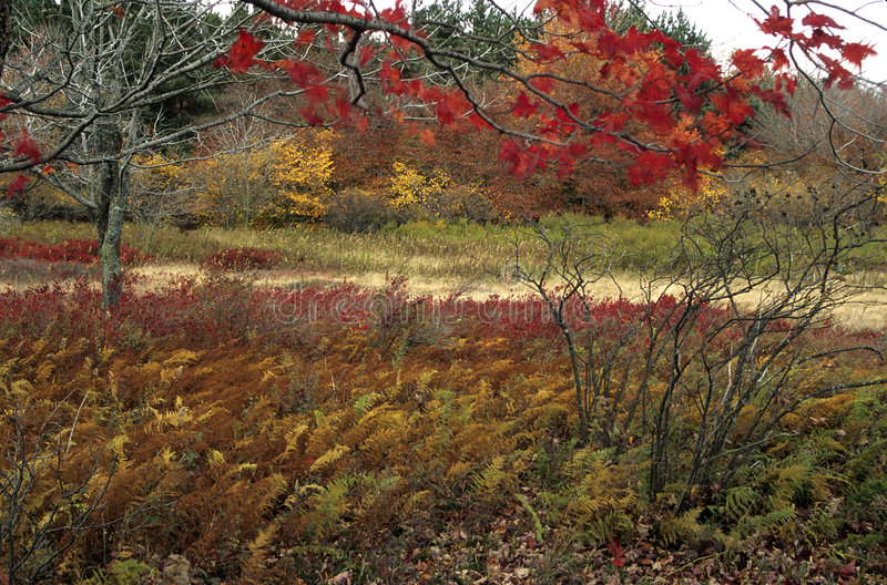 Autumn Scenic @ Dolly Sods royalty free stock images