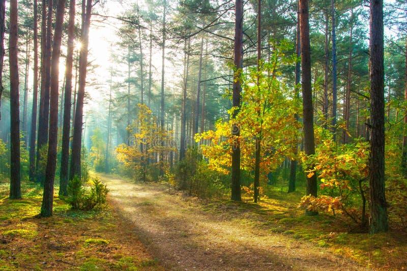 Autumn. Scenic forest illuminated of sun. Beautiful sunny nature landscape stock photos