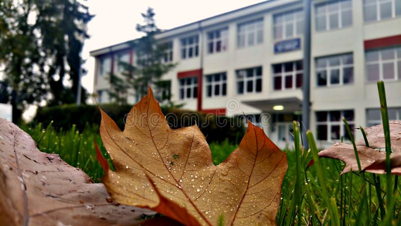 Autumn and school. royalty free stock image