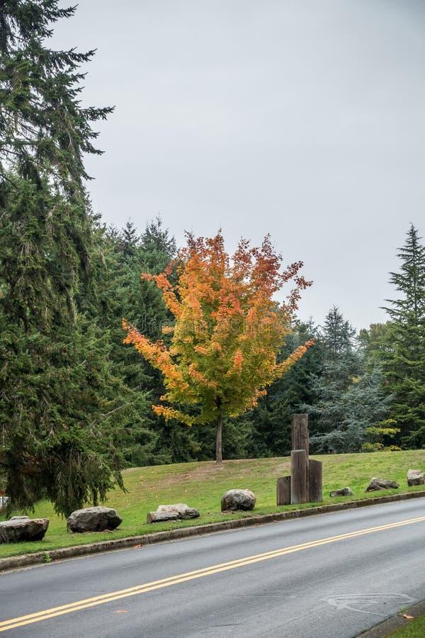 Autumn At Seahurst 2 stockbild