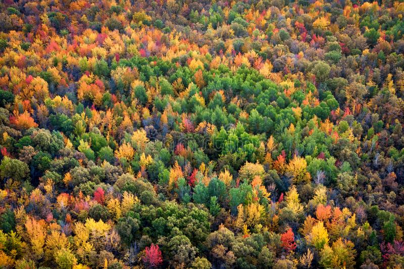 Autumn Season Background, Aerial View of Maple Trees Changing Color, Quebec, Canada. Autumn season background, aerial view of lush maple tree forest showing royalty free stock image