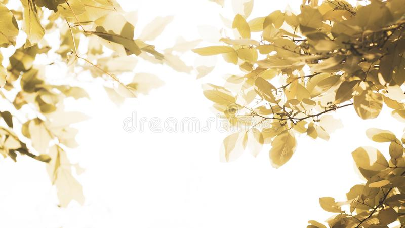 Autumn season banner. Greeting card  foliage of yellow, orange and red color . leaves. Macro. Isolated over white background . royalty free stock photography