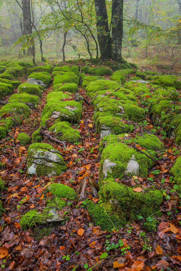 Autumn season in the forest stock photography
