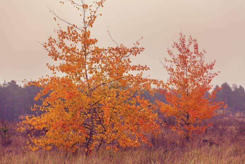 Autumn tree. Autumn season in forest stock photos