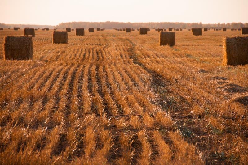 Autumn season. Ingathering nSeptembern farm field autumn comes the harvest royalty free stock photo